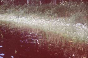 Picture of wetlands
